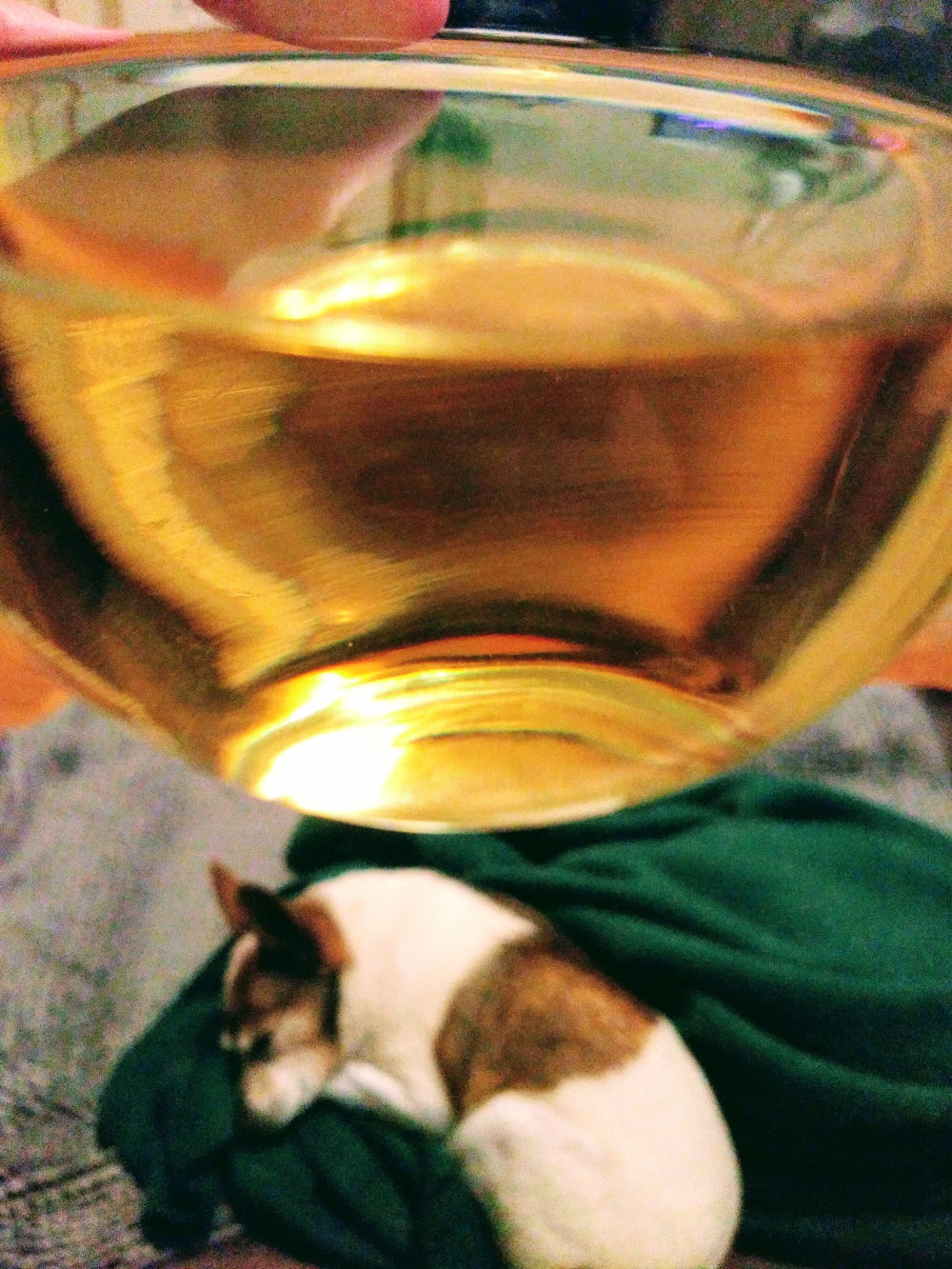 Wine Dog image